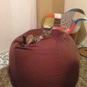 人をダメにするソファは猫をもダメにする ねこっぷる 猫 人をダメにする ハムスター