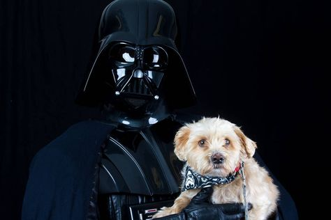 Shelter Animals Portraits With Star Wars Characters Animal