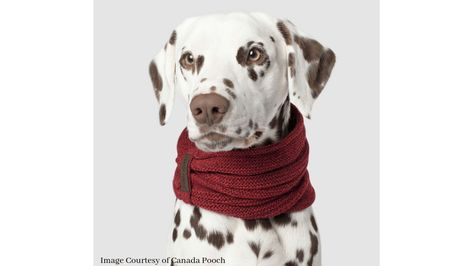 Scruffy Scarf Roundup on Dog Mom Discoveries