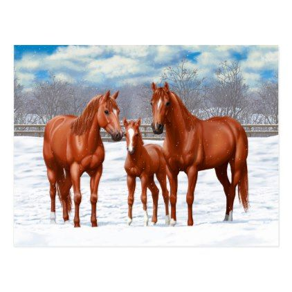 Chestnut Sorrel Quarter Horses In Snow Postcard Zazzle Com