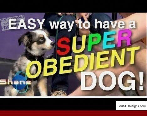 House Training A Puppy Understand Your Pet S Behavior Dog