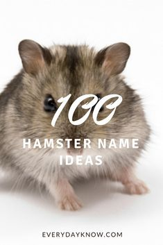100 Hamster Name Ideas Hamster Names Cute Hamster Names Hamster