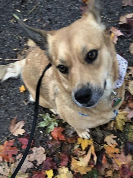 Date Lost 11 06 2019 Dog S Name Indie Breed Of Dog Unknown Gender Female Closest Intersection Minnehaha Ave 44th St City Wher Losing A Dog Dog Ages Dogs