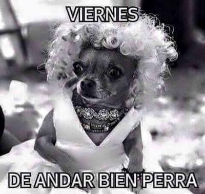 Memes De Chihuahuas Mascotas Cute Chihuahua Chihuahua Chihuahua Love
