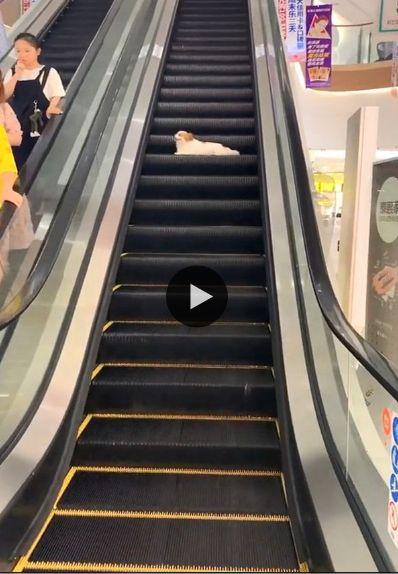 cachorro brincando na escada rolante.