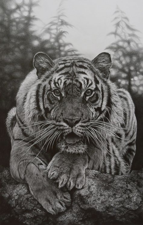 Determine The Target By Paul Martin On Px Black And White - Stunning drawings of endangered wild animals by richard symonds