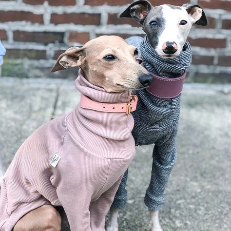 italian greyhound and whippet clothes / iggy clothes / Dog Sweater / stripes dog clothes / ropa para galgo italiano y whippet / BLACK Miniature Italian Greyhound, Italian Greyhound Clothes, Perro Whippet, Black Lab Puppies, Corgi Puppies, Black Labrador, Black Labs, Dog Grooming Business, Pet Grooming