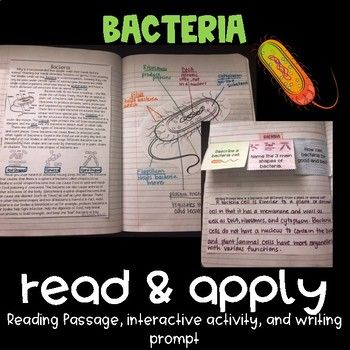 Bacteria Reading Comprehension Interactive Notebook Activity {NGSS MS-LS1-1}