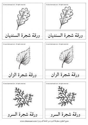 انواع اوراق الاشجار بطاقات المطابقة ذات الثلاث قطع Learning