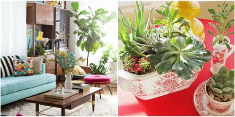How To Decorate With Houseplants