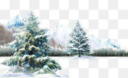 Polar Bear Winter Light Wallpaper Winter Scene Festivals Around The World Snow Scenes Winter Scenes