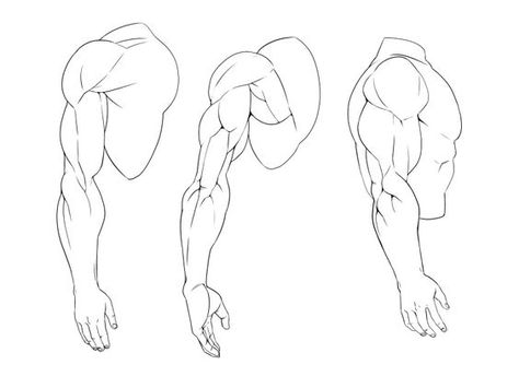 5 Strong Tutorials For Learning How To Draw Anime Muscles Anime Drawings Drawings Easy Cartoon Drawings