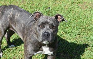 Adopt Fizgig On Animal Control Animals Panama City Panama