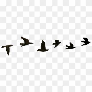 Bird Birds Black Tumblr Nature Edits Png Birds Tumblr Birds Flying Silhouette In Line Transparent Png Flying Bird Silhouette Birds Flying Black Bird Fly