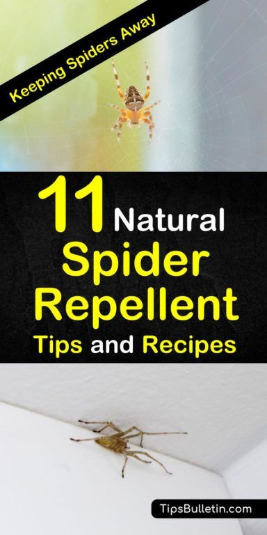 Keeping Spiders Away - 11 Natural Spider Repellent Tips and Recipes