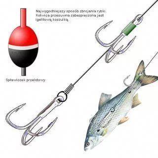 Pin auf Fischen