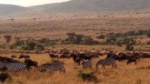 Backyard Safari Land Water Habitat - BACKYARD HOME