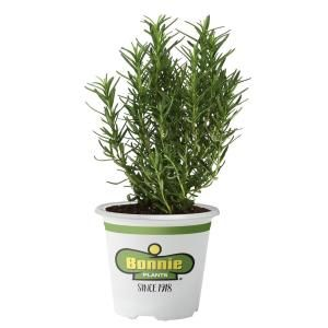 Bonnie Plants 2 32 Qt Citronella Mosquito Premium 5028 The Home