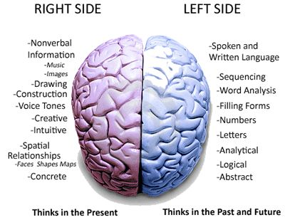 The In The Left Of Specializes Side Brain