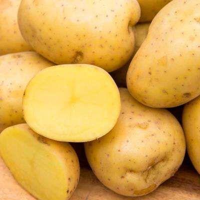 Vegetable Plants Edible Garden The Home Depot In 2020 Planting Vegetables Potatoes Flavorful Vegetables