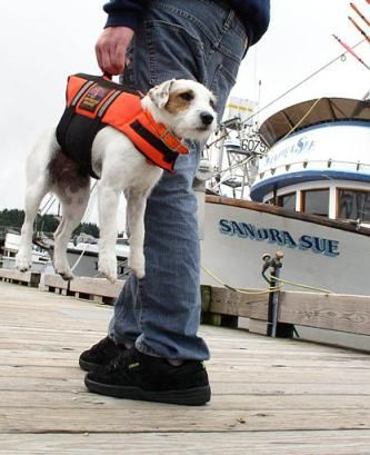 Wearing a life jacket, Trek, a 3-year-old Jack Russell Terrier, gets a lift from owner Timmy Gossett, crew member aboard the F/V Laguna Star, a salmon seiner moored in St. Paul Harbor in Kodiak, Alaska, July 1, 2004. Equipped with a handle, the life jacket provides an emergency lifting point should the dog fall overboard. (AP Photo/Marion Owen)