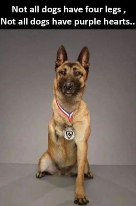 Wicked Training Your German Shepherd Dog Ideas. Mind Blowing Training Your German Shepherd Dog Ideas. Military Working Dogs, Military Dogs, Police Dogs, Military Service, War Dogs, Animals And Pets, Funny Animals, Cute Animals, Brave Animals