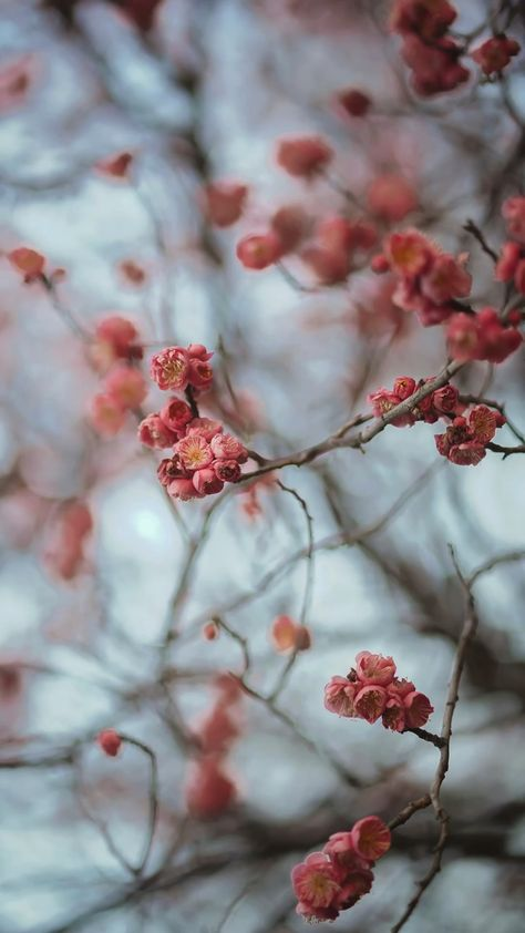 Spring Blossoms Wallpapers