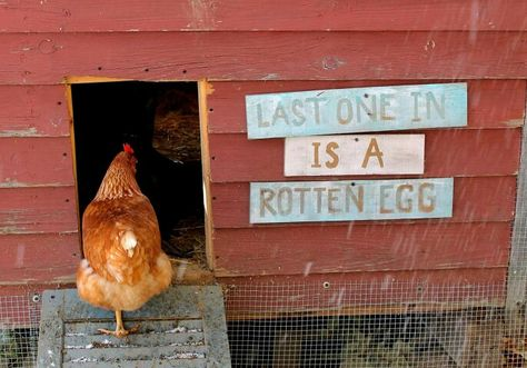 Last One In Is A Rotten Egg Chicken Coop Sign.