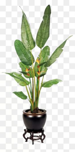 Green Large Leaves Potted Buckle Png Large Leaves Potted Green Leaves Green Plants Png Transparent Clipart Image And Psd File For Free Download Small Potted Plants Potted Plants For Shade Potted