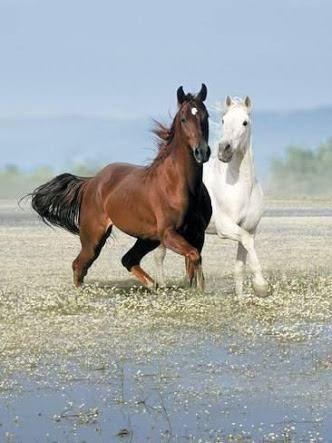 Horses おしゃれまとめの人気アイデア Pinterest Zehra 美しい馬 馬 作品