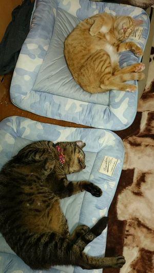 ヒンヤリ気持ちい Nクールに抱かれたペット がとろけてる Naver まとめ Cats Animals Odai