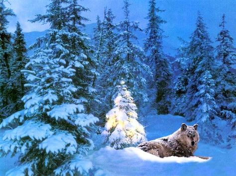 Wolf christmas backgrounds download christmas animals wallpaper wolf christmas backgrounds download christmas animals wallpaper christmas wallpaper wolf wolves pinterest christmas wallpaper christmas animals publicscrutiny Image collections
