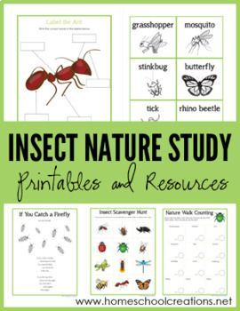 Insect Nature Study printables   {Gentle + Classical Nature Science