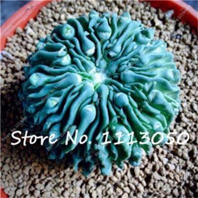 Acheter Mixte Cactus Graines D Interieur Plantes D Ornement