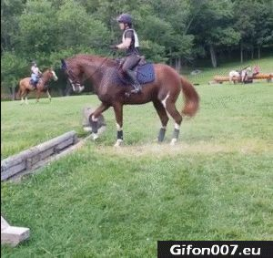 This is funny because this is really how horses are on the first jump of the yea - Horses Funny - Funny Horse Meme - #horsememe #horse #funnyhorse -  This is funny because this is really how horses are on the first jump of the year. < I dont ride English or do events I ride western and drive cattle and my horse does this and its the funniest thing ever cause he hates getting his feet wet  The post This is funny because this is really how horses are on the first jump of the yea appeared first on