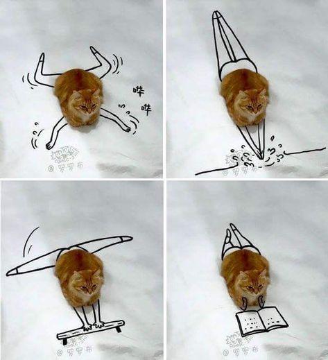 """Franchement drôle, je trouve!D'autant qu''on dirait que le chat pense """"C'est ça...Allez, vas-y, amuse-toi...Qu'est-ce ki faut pas faire, pour être un bon chat avec un maître aussi cinglé""""..."""