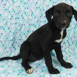 Available Pets At Wright Way Rescue In Morton Grove Illinois Pets Dog Projects Animal Rescue