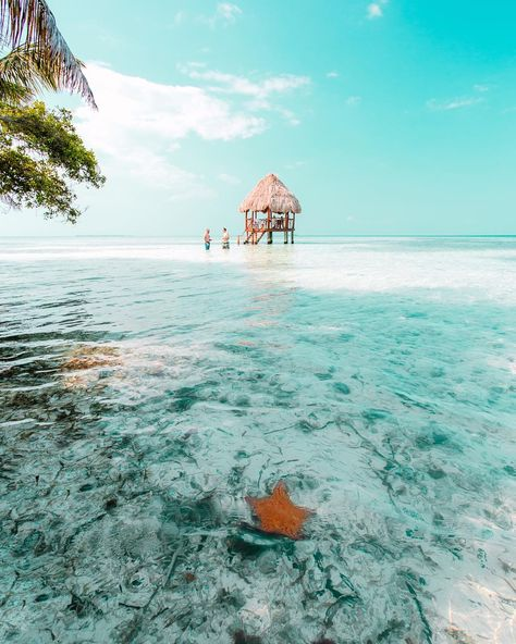 From jungles to beaches and from caves to reefs, Belize might just be the perfect Central American vacation. Here are 10 reasons why. Is Maldives dangerous to visit? Belize Hotels, Belize All Inclusive, Belize Vacations, Belize Travel, Belize City, Belize Cruise Port, Belize Honeymoon, Napoleon Hill, Cave Tubing Belize