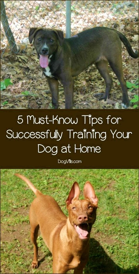 Dog Training Hacks To Make Sure You Reach Your Goals In Training