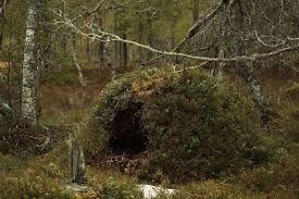 Znalezione obrazy dla zapytania gawra niedźwiedzia (With images ...
