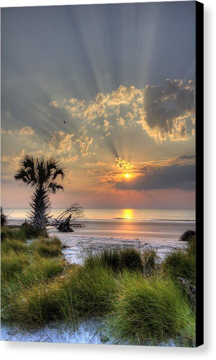 Hunting Island Canvas Print featuring the photograph Hunting Island Sc Sunrise Palm by Dustin K Ryan