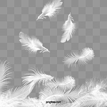 Plumas Voladoras Ligeras Agil Cayendo Volador Png Y Psd Para Descargar Gratis Pngtree Angel S Feather Feather Background Smoke Background