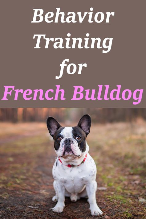 Strategies For Behavior Training For French Bulldogs Buldog
