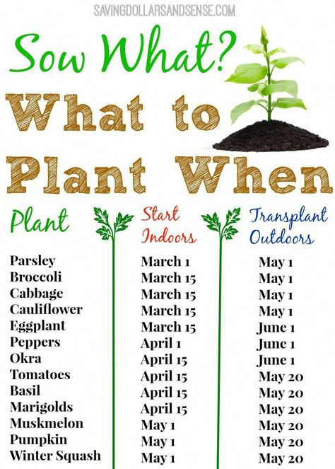 What To Plant When Chart - Saving Dollars & Sense