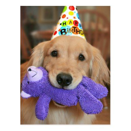 Golden Retriever With Happy Birthday Hat And Toy Postcard Zazzle