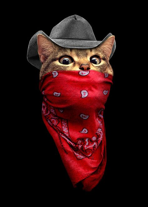 Displate Poster THIEF cat #cowboy #bandana #cute #decor #catlover