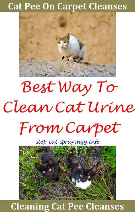 Cat Spray How To Get Rid Why Has My Cat Started To Wee In The
