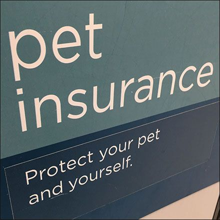 Pet Insurance To Protect Your Pet And Yourself Cheap Pet