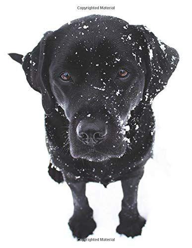 Black Labrador Puppy Calendar Notebook Dog Wisdom Quotes Https Www Amazon Com Dp 1729042198 Ref Cm Sw R Labrador Art Black Labrador Puppy Black Labrador