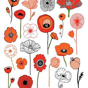 Poppies Illustrations De Fleurs Coquelicot Dessin Et Dessin Fleur